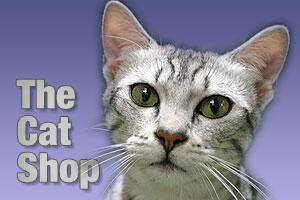 pet products for cats and kittens